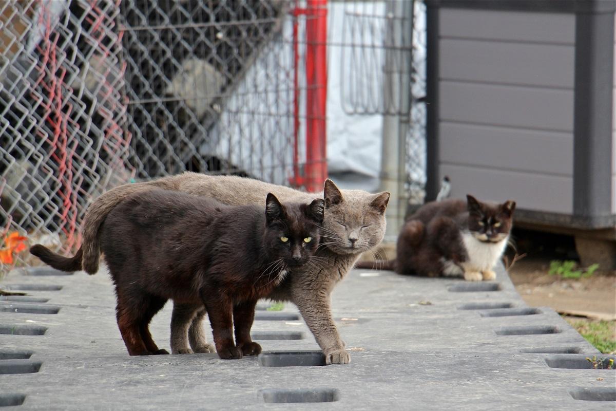 gruppo di gatti randagi