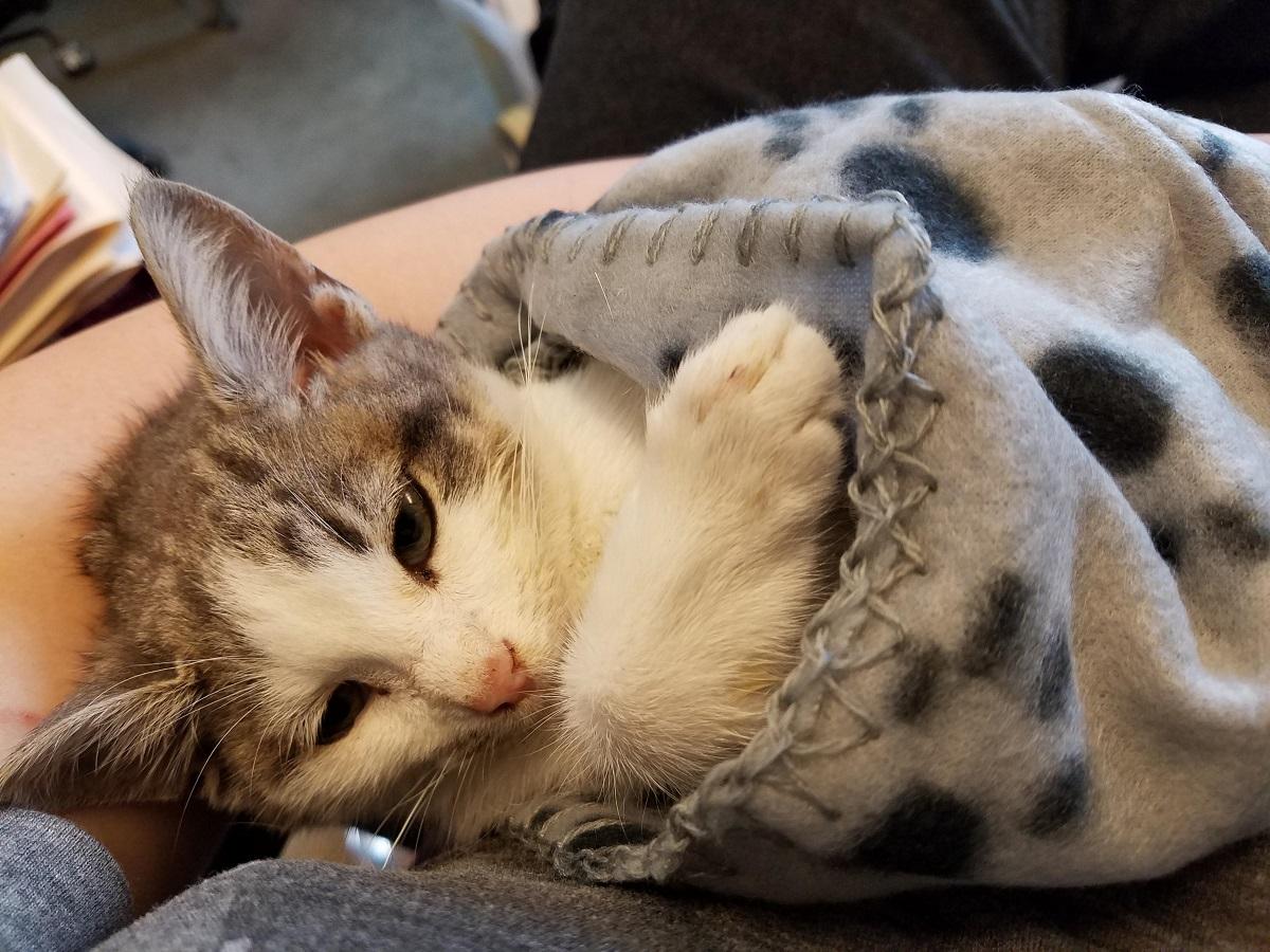 gatto malato preso in braccio