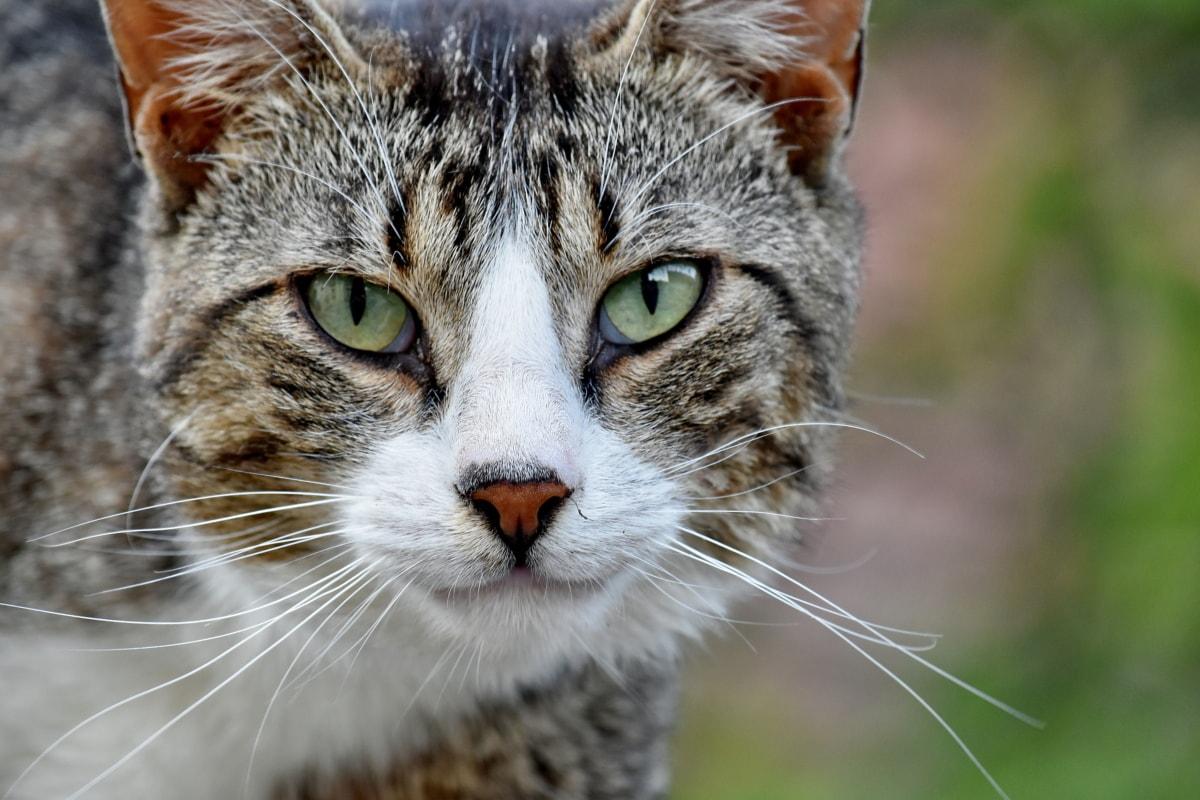 gatto randagio