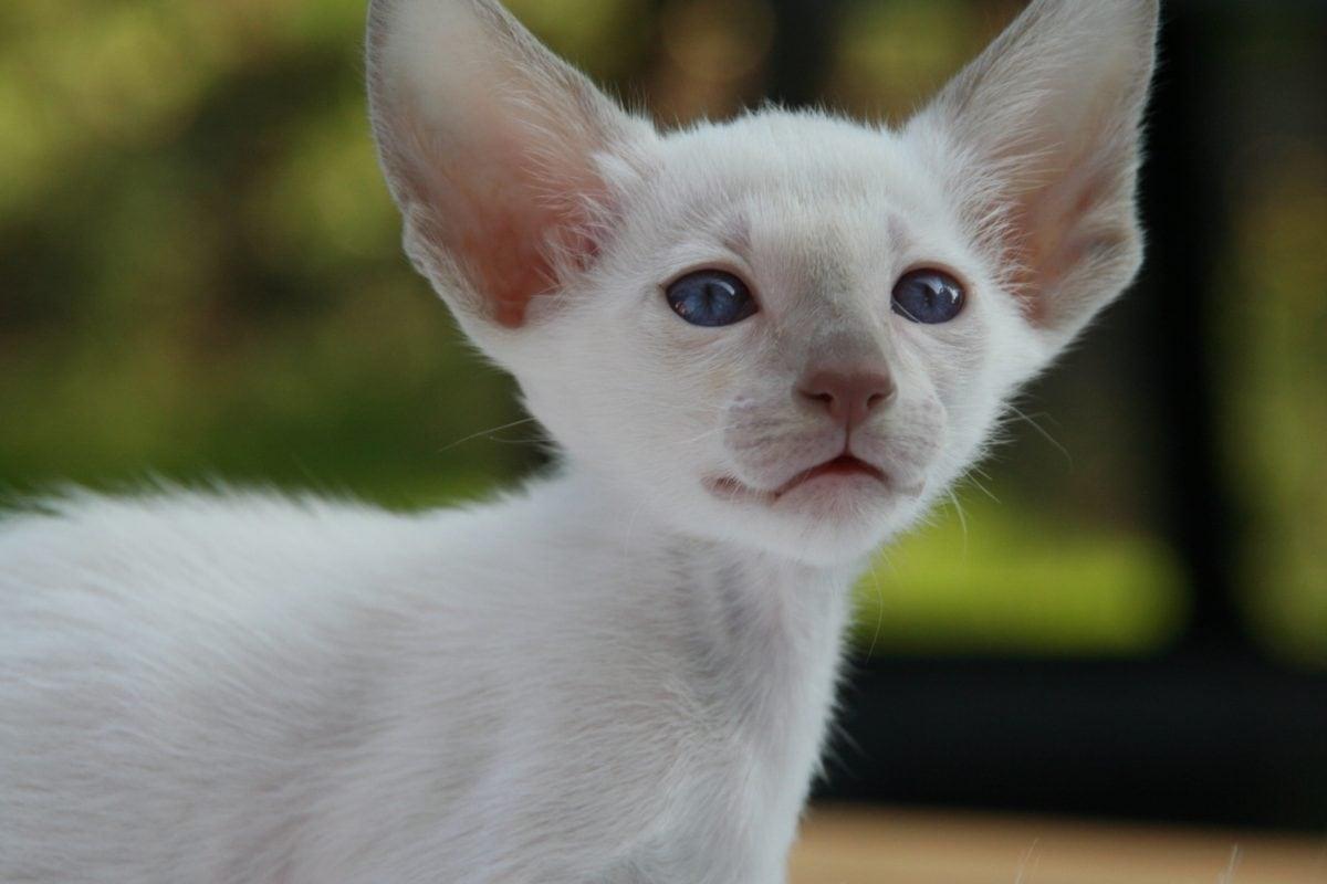 cucciolo con le orecchie grandissime