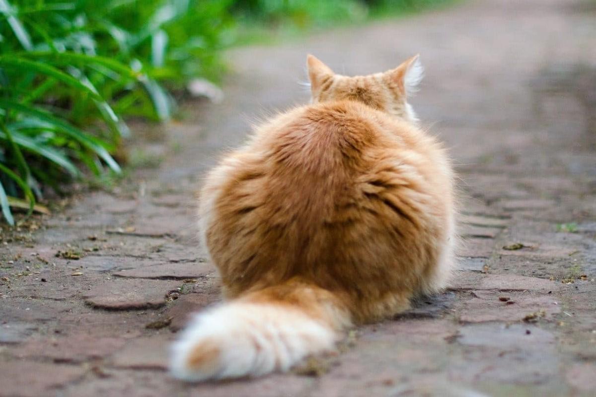 gatto accucciato per terra
