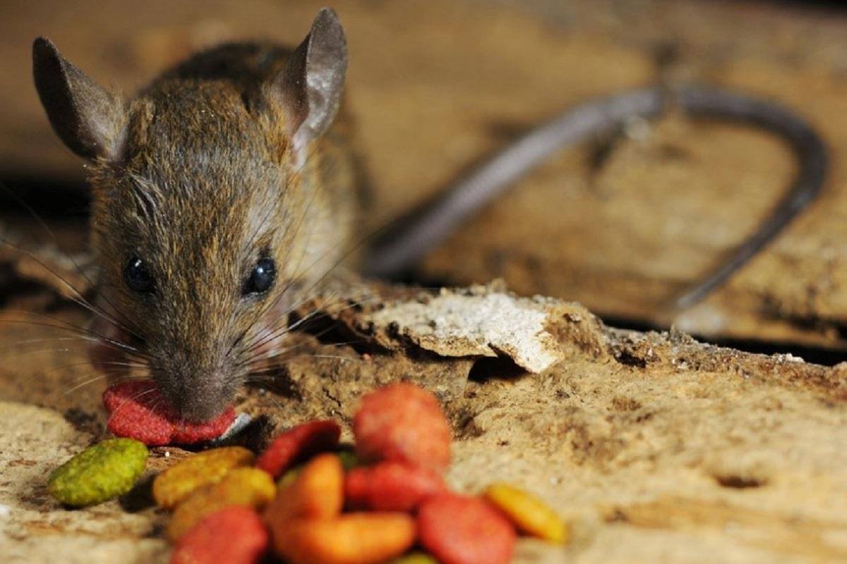 veleno per topi fa male al gatto