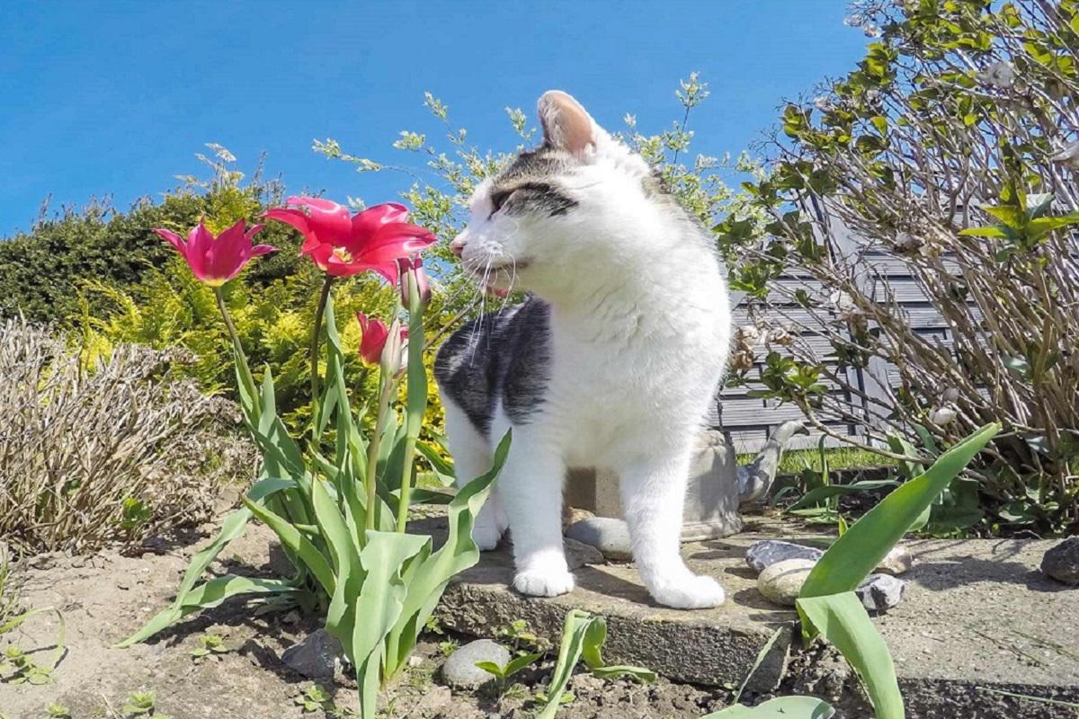 gatto odora i gigli