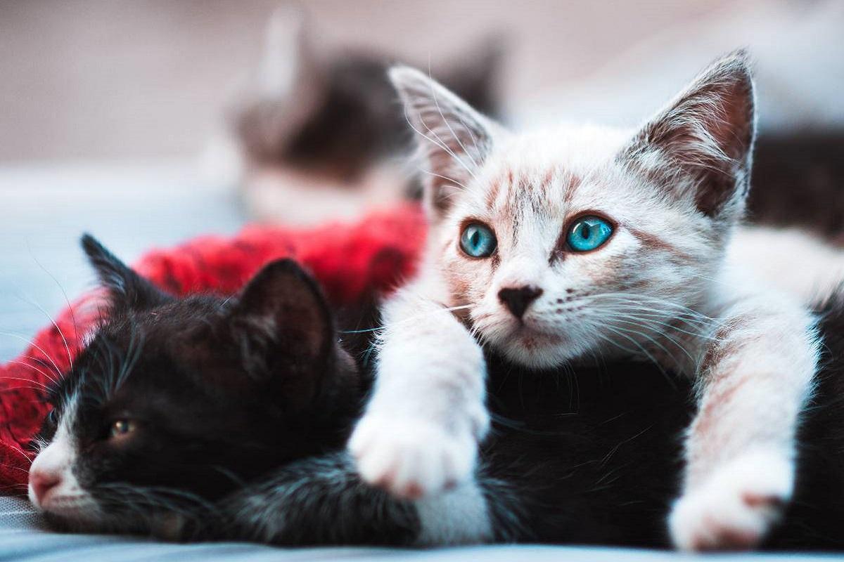 gattini uno sull'altro