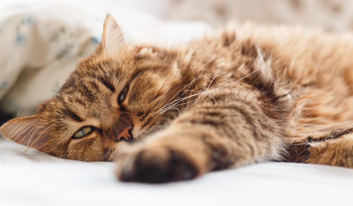 gatto con gli occhi socchiusi