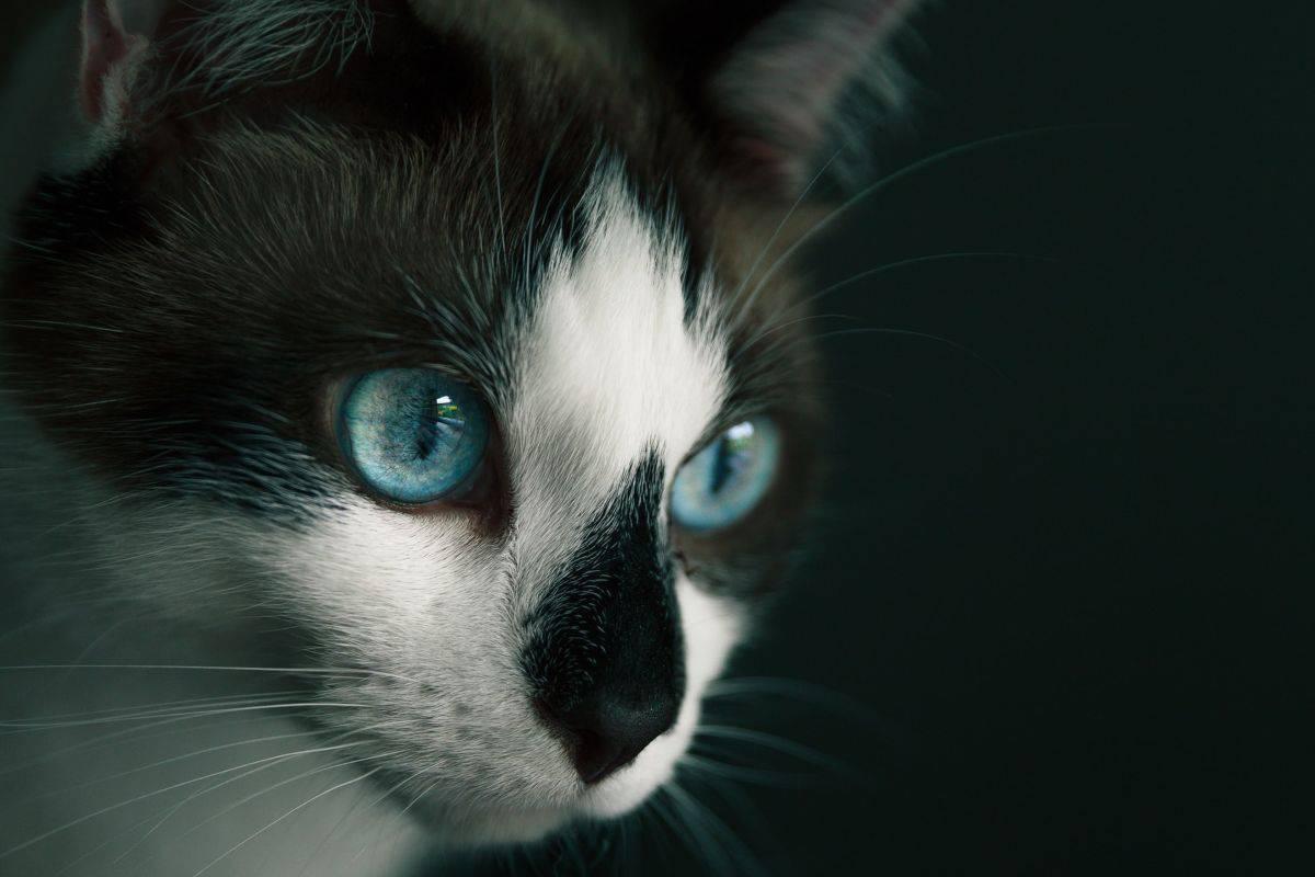 gatto con lo sguardo fisso