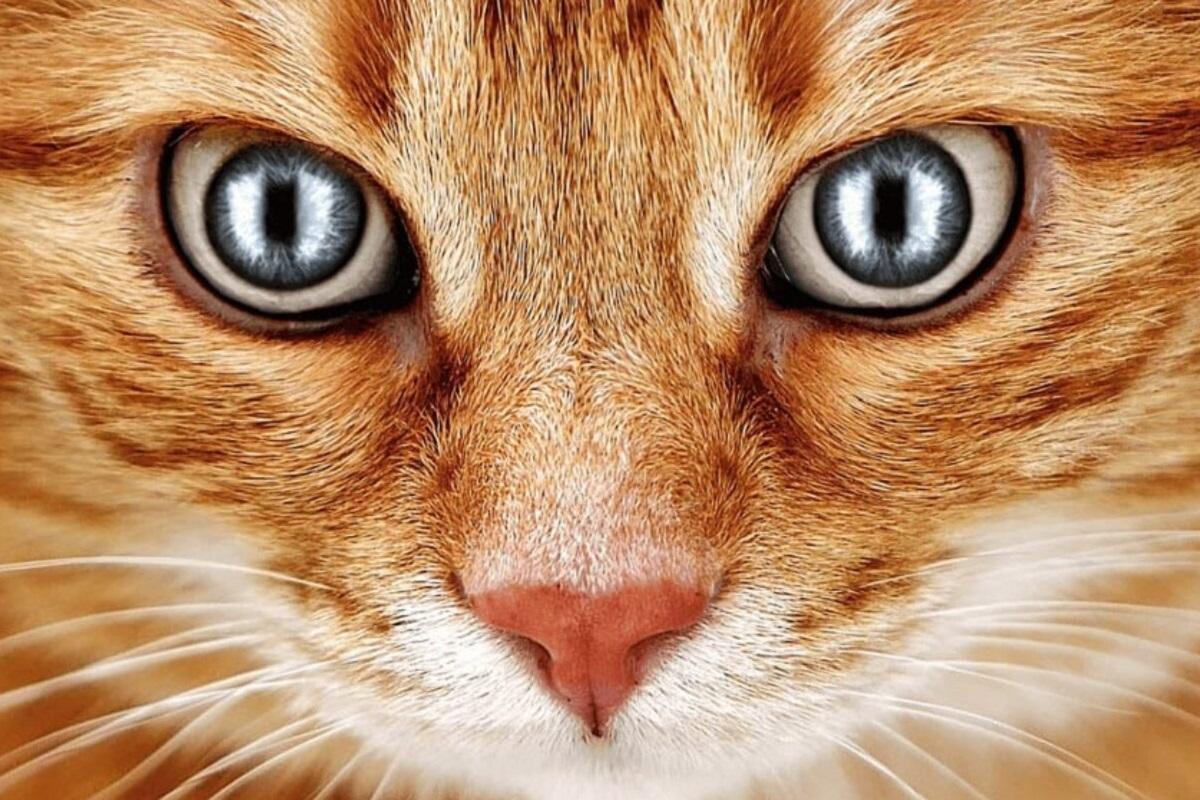 sguardo magnetico del gatto