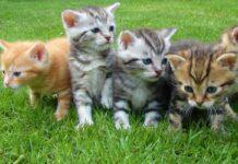 cuccioli di gatto in campagna