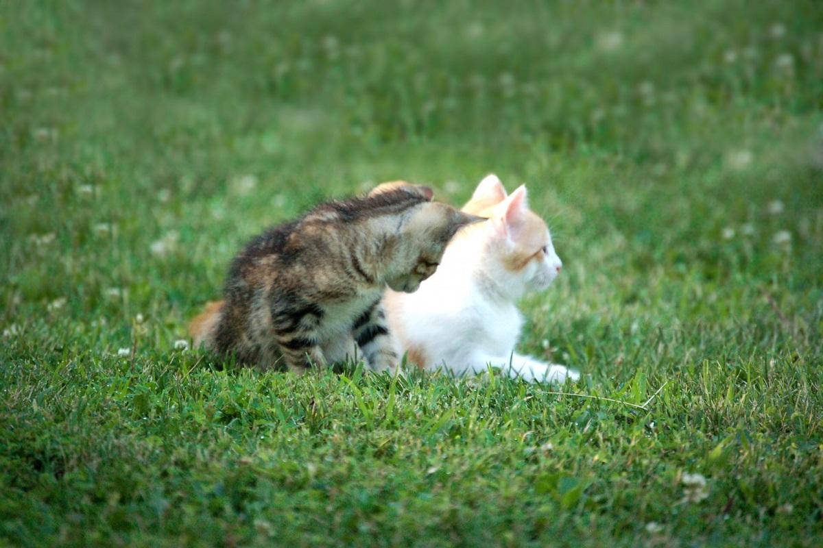 gattini si rilassano