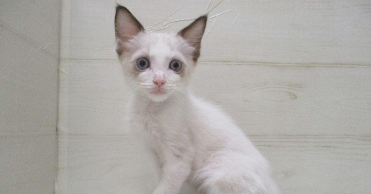 gattino attento