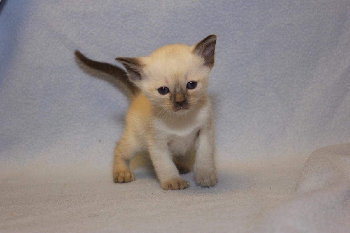 gattino di colore bianco