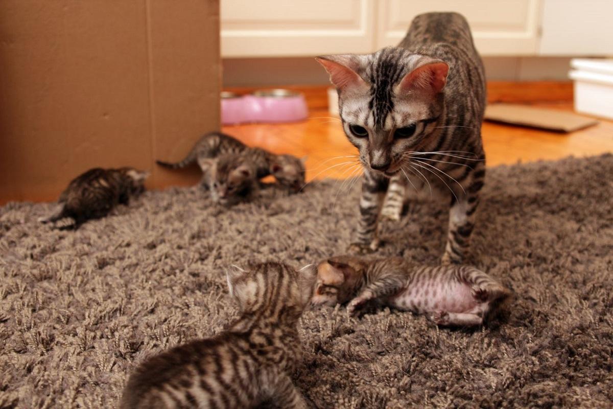 una gatta con i suoi cuccioli