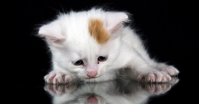 cucciolo di gatto su sfondo nero