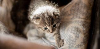 dove portare gattini appena nati