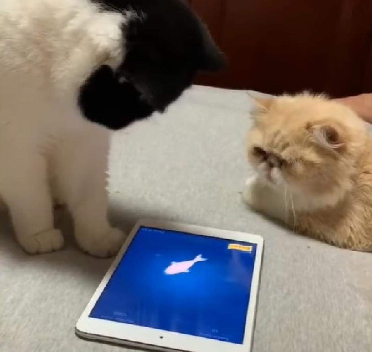 gattini calma momento di svago