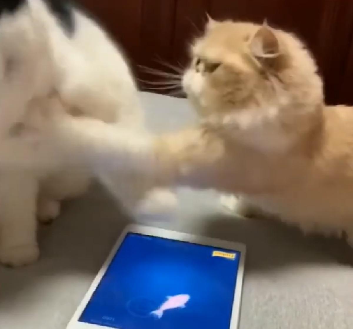 gattini ipad qualcosa va storto