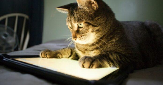dei gattini stanno giocando con ipad video divertirvi