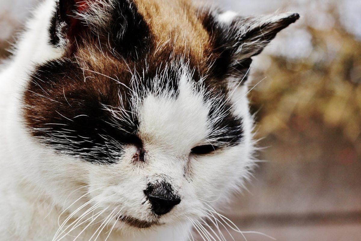 gatto con il pelo arruffato