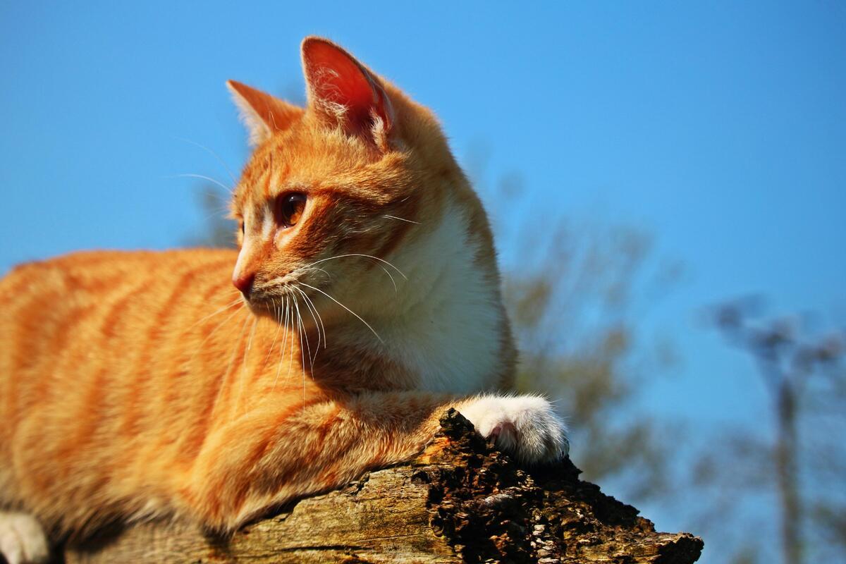 gatto su un tronco