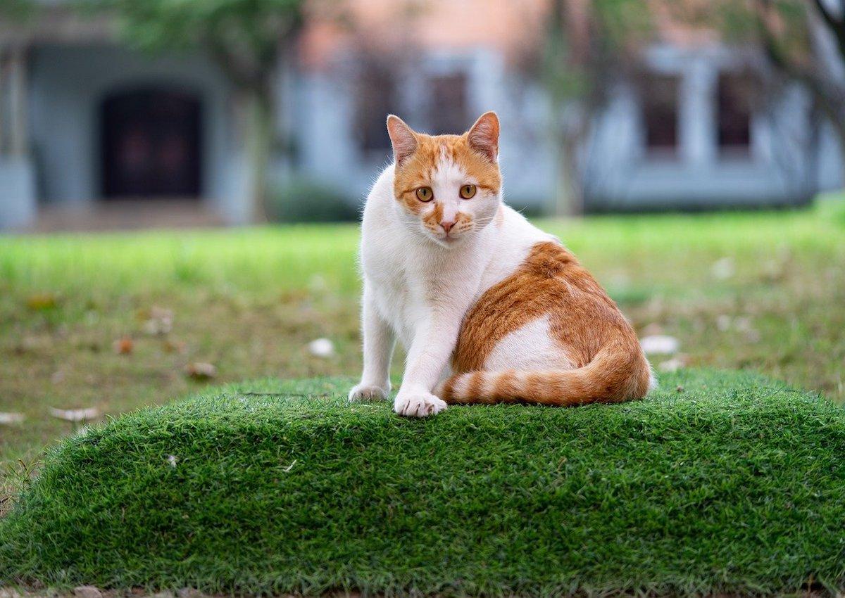 gattino gironzola