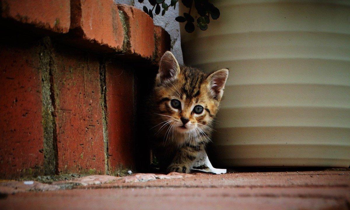 gatto lungo la strada