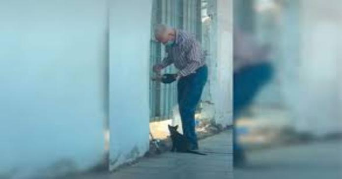 anziano con gatto randagio