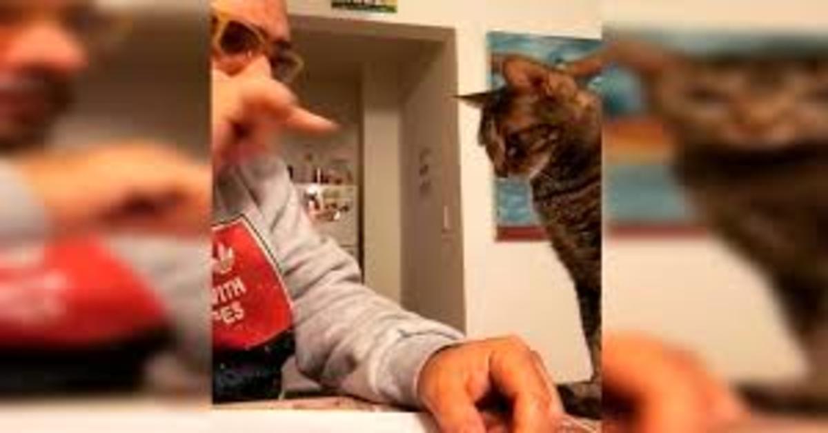 Comico argentino si divide lavori di casa con il suo gattino