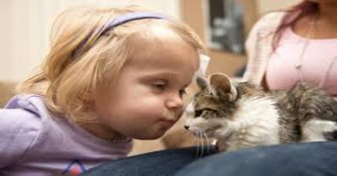 Scarlette e Doc gatto tripode