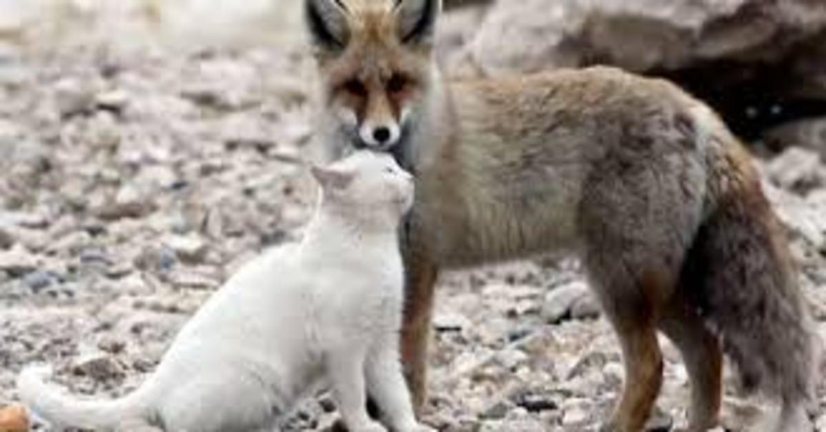 Gatto e volpe coccole
