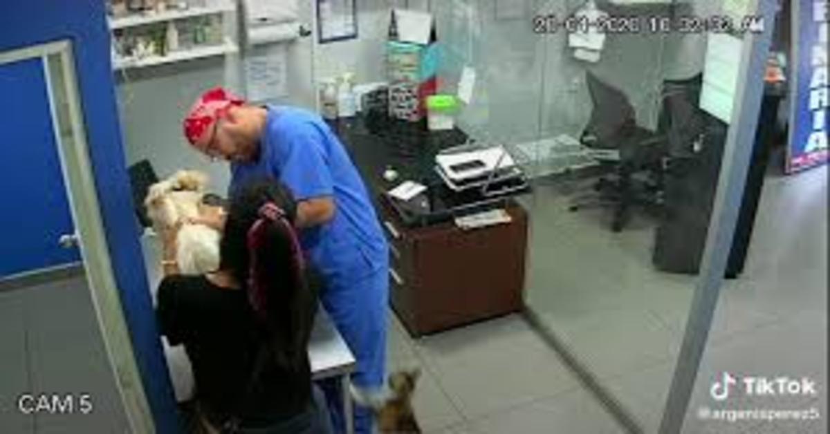 gatto morde il veterinario che vaccina un cane