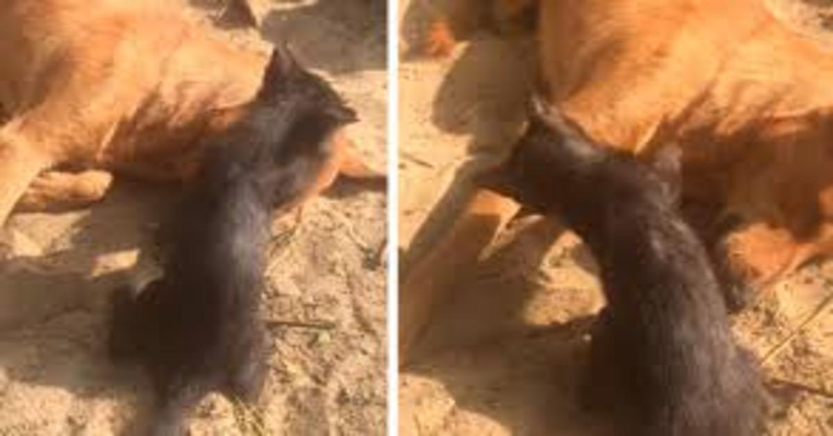 gatto cerca invano di risvegliare amico cane morto