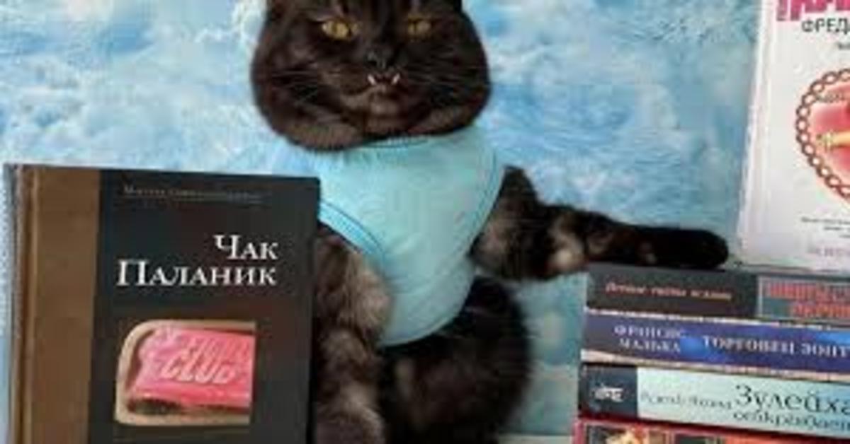 Gatto Vampiro con libri che vende per beneficienza