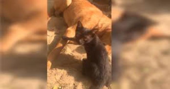 gatto guarda sconsolato il padrone davanti a cane morto