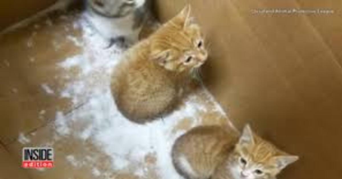 gattini appena salvati nella neve