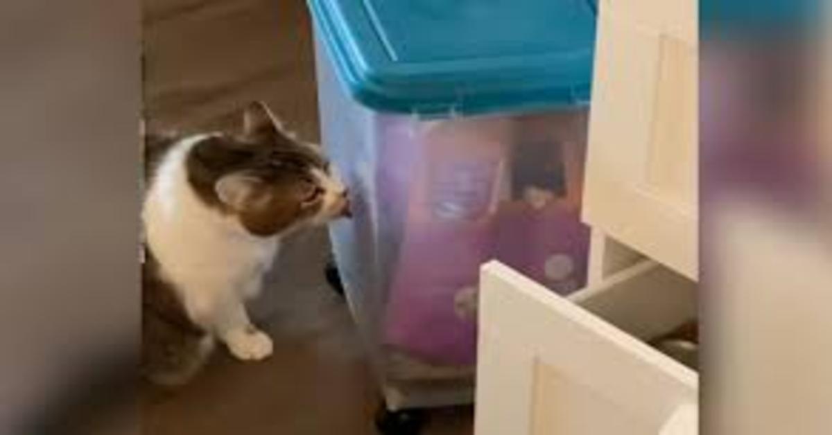 gatto lecca il recipiente che contiene il suo cibo preferito