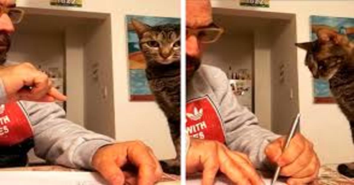 gatto ascolta padrone che divide lavori domestici