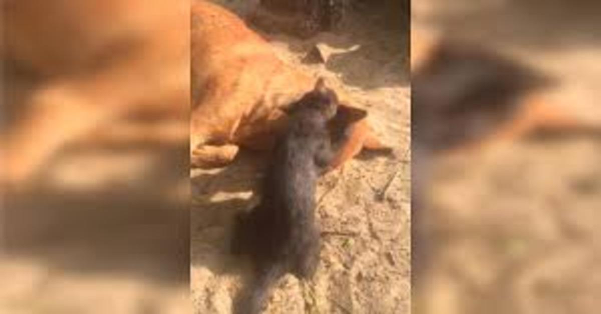 gatto disperato cerca di svegliare cane morto