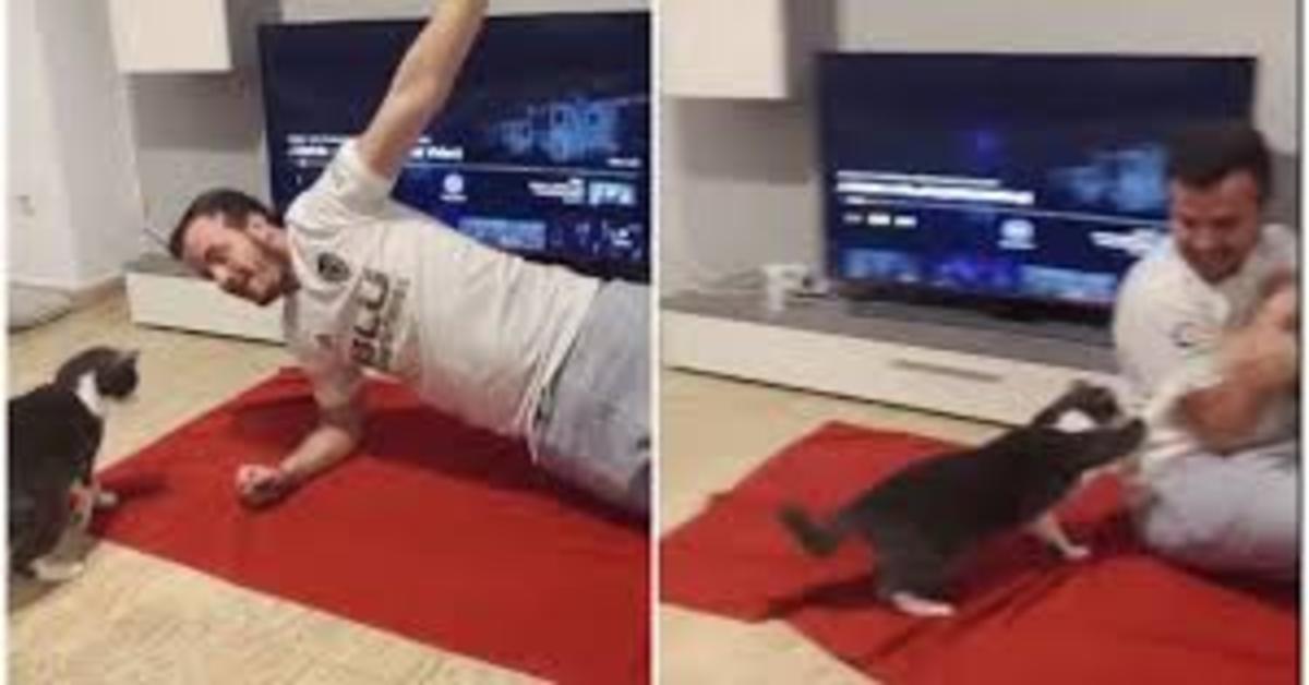 gatto non vuole che il padrone faccia sport