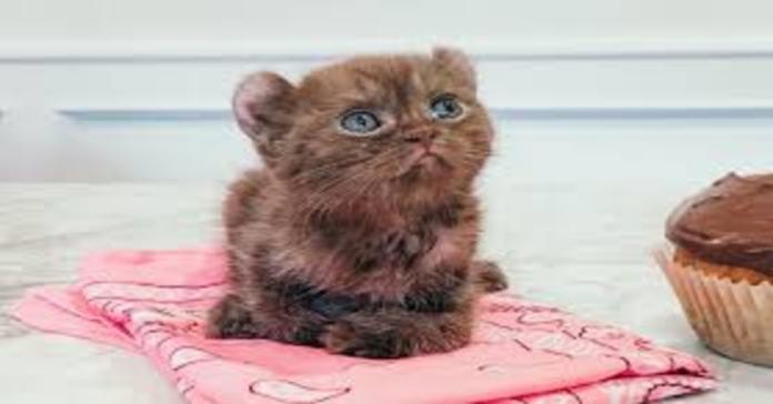 gatta quill orecchie orso su tappeto rosa