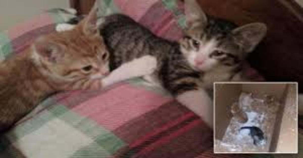 gattini salvi dopo aver rischiato di morire nella neve