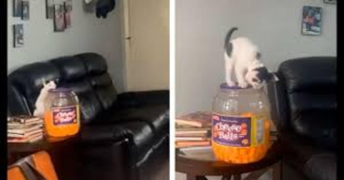 gatto cerca di prendere palline da un vaso