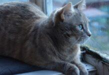 due gattini diventano migliori amici lavavetri video