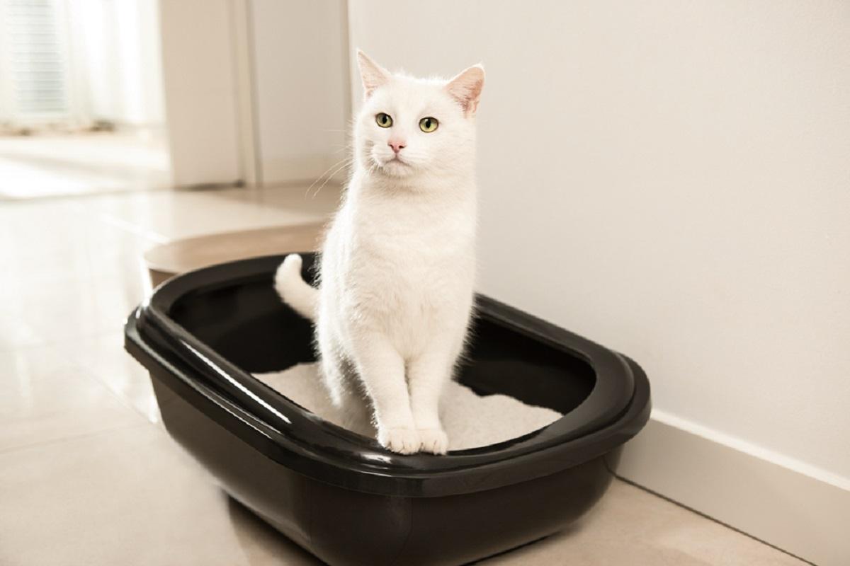 gattino usare lettiera