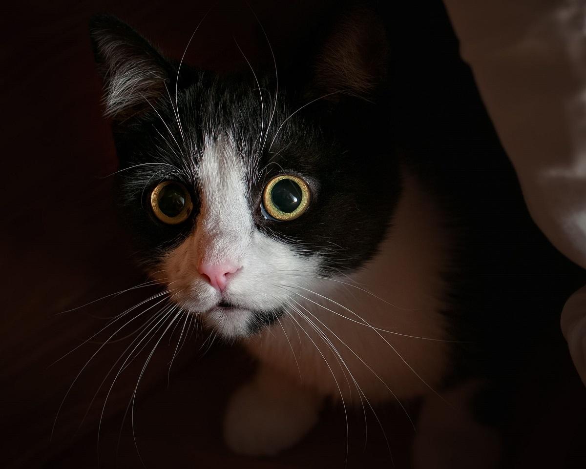 gattino non vuole essere solo