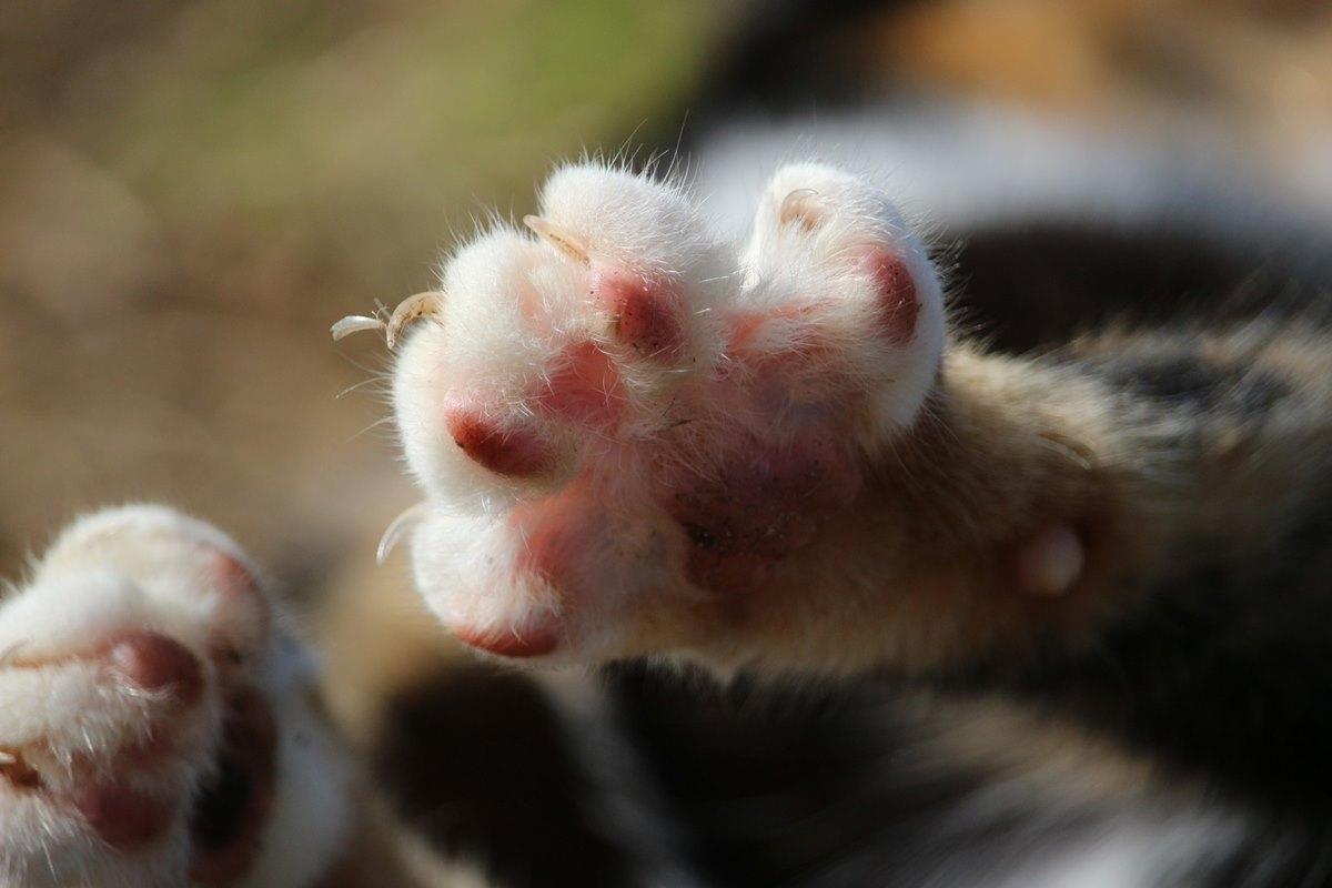 gatto tira fuori le unghie