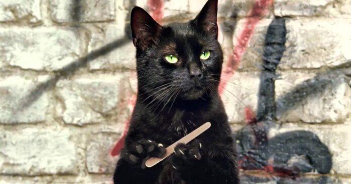 gatto meme che lima le unghie