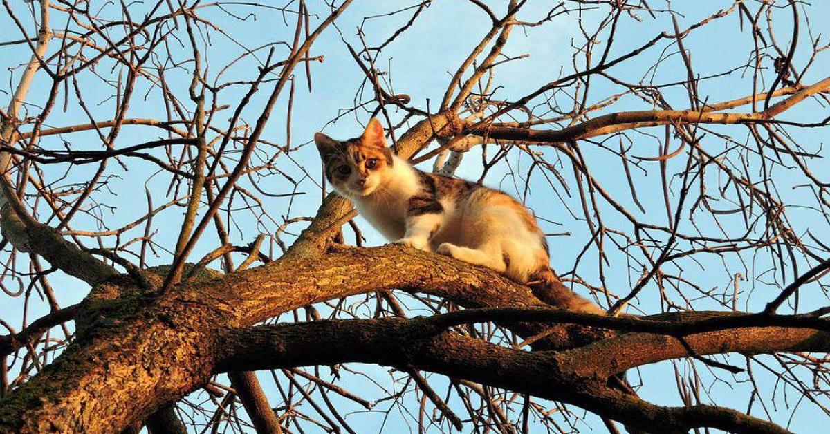 gattino non sa scendere da albero