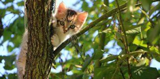 gattino su albero