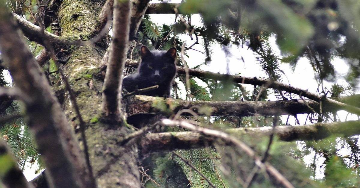 gatto nero riposa su albero