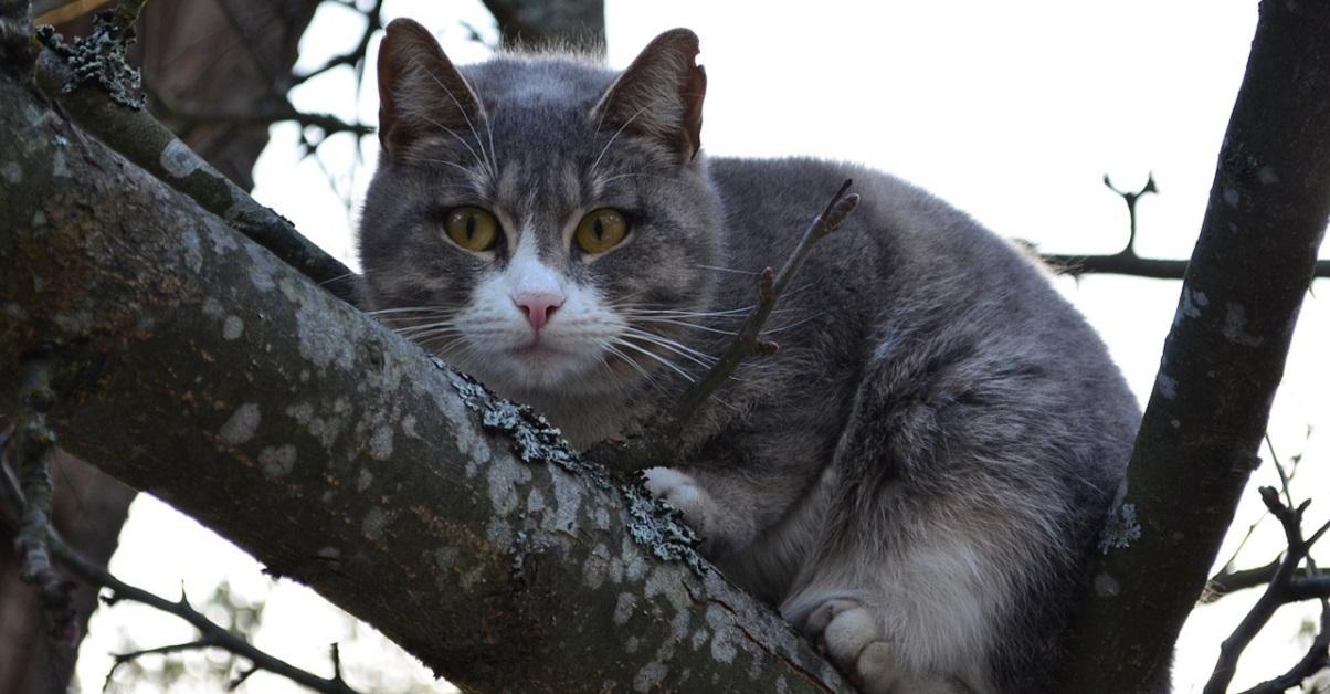 gatto obeso su albero